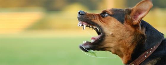 Dog Bites-Lieber & Lieber Law Group, LLP